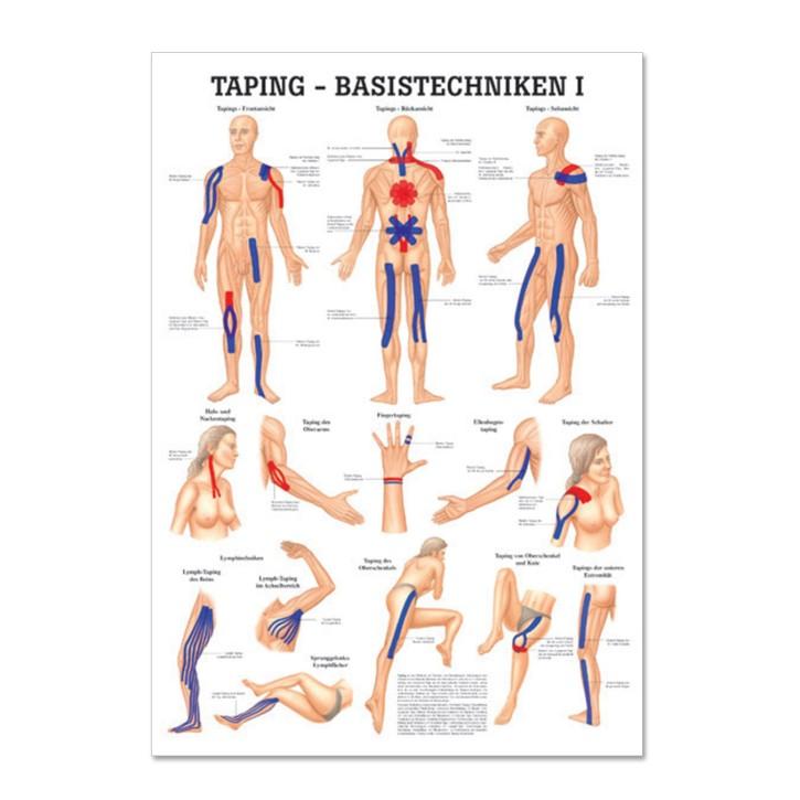 Lehrtafel | Taping | Rüdiger Anatomie