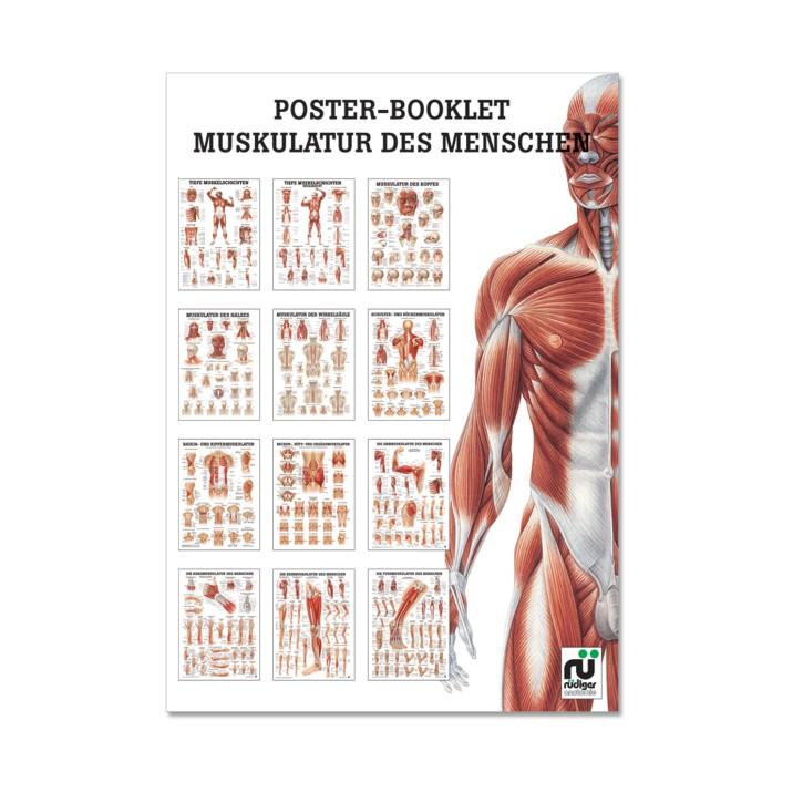 Poster Booklet   Muskulatur des Menschen   Rüdiger Anatomie